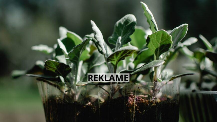 Plantera och så utomhus
